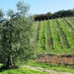 Chianti walking tour