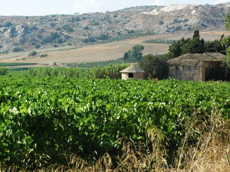 vigna-sicilia-4-